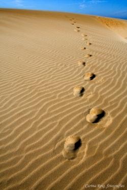 elegeix el teu camí...